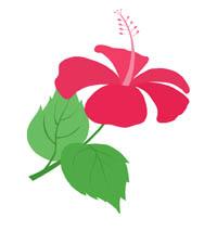 hibiscus-200